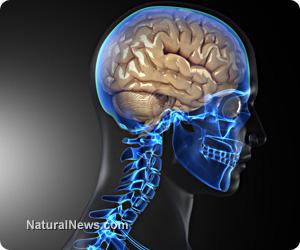 Man-Brain-Body-Skeleton