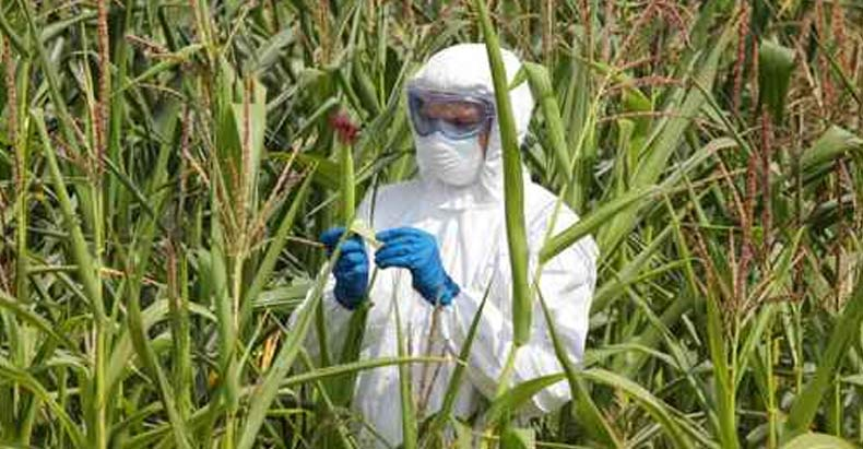 Hawaii Sees 10 Fold Increase in Birth Defects After Becoming GM Corn Testing Grounds