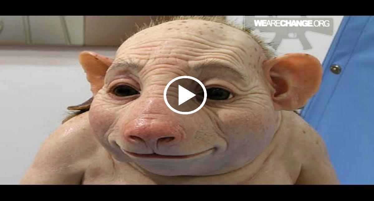US scientists create chimeras: half-human, half-animal ...