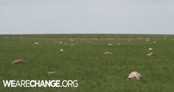 120,000 antelope died in 4 days WTF ?