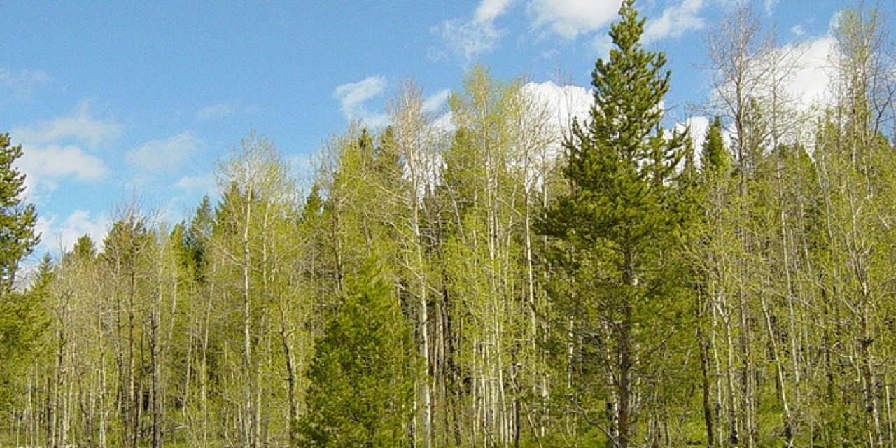 Will the US Open a National Forest to Fracking?