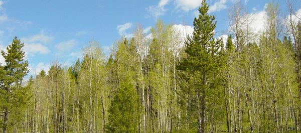 National-Forrest-1560x690_c
