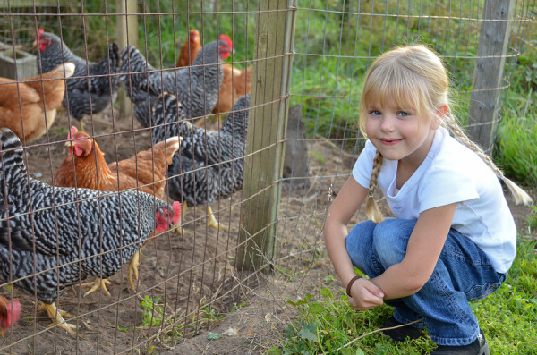 Michigan Loses 'Right To Farm' This Week: A Farewell To Backyard Chickens and Beekeepers