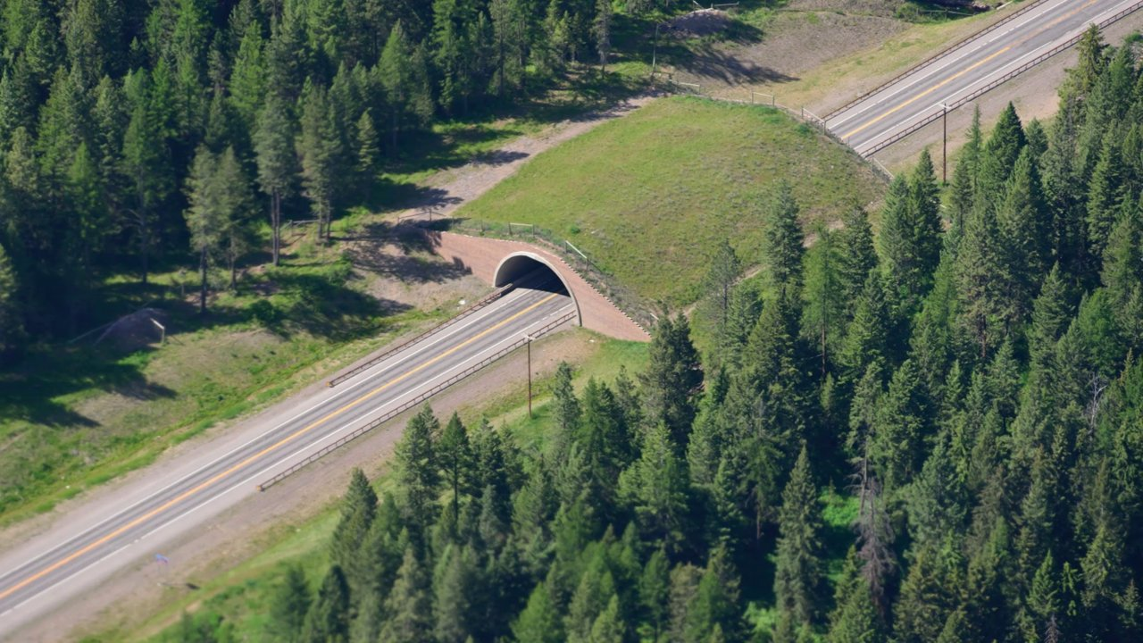 Ending Road Kill: Land Bridge Gives Animals Right of Way on Roads