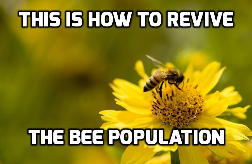 This Is How To Revive The Honeybee Population