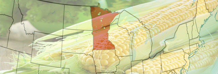 Minnesota's New GMO Labeling Bill Could Change Everything For Monsanto