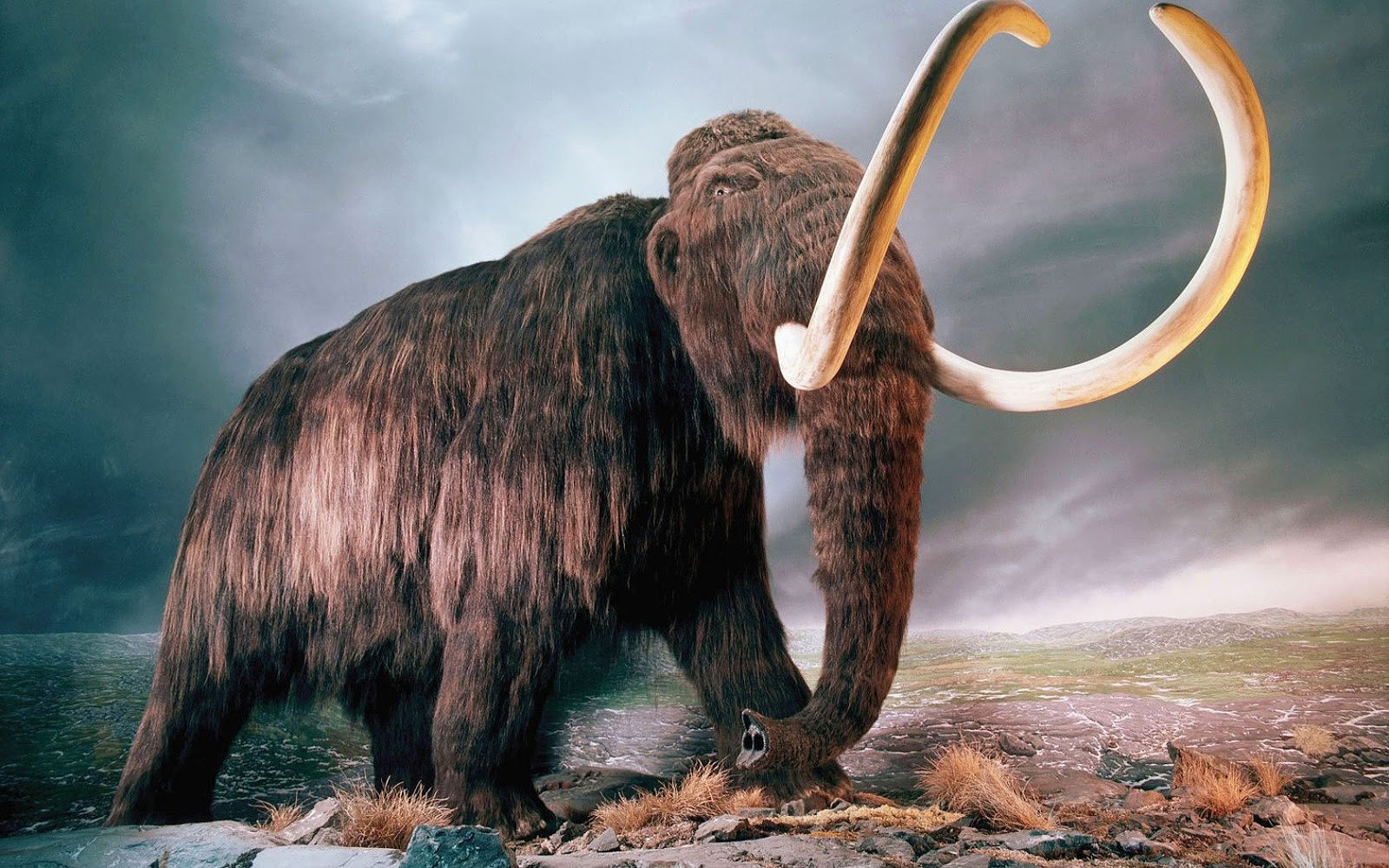 Harvard Scientists successfully add woolly mammoth DNA into elephant