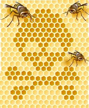 honeybee-111