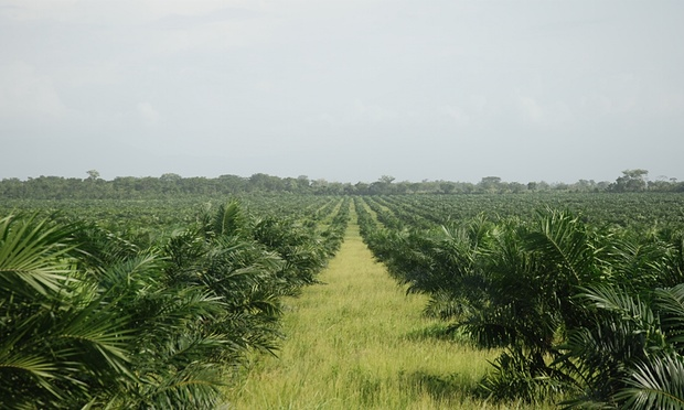 Palm oil firms in Peru plan to clear 23,000 hectares of primary forest