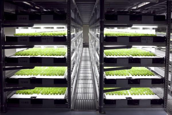 robot-lettuce-farm1-1024x683