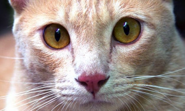 Pennsylvania Cop who Killed Cat that Hissed at Him Cited for Animal Cruelty