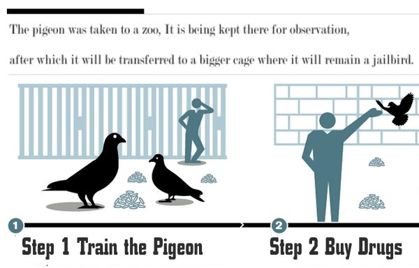 pigeion guide