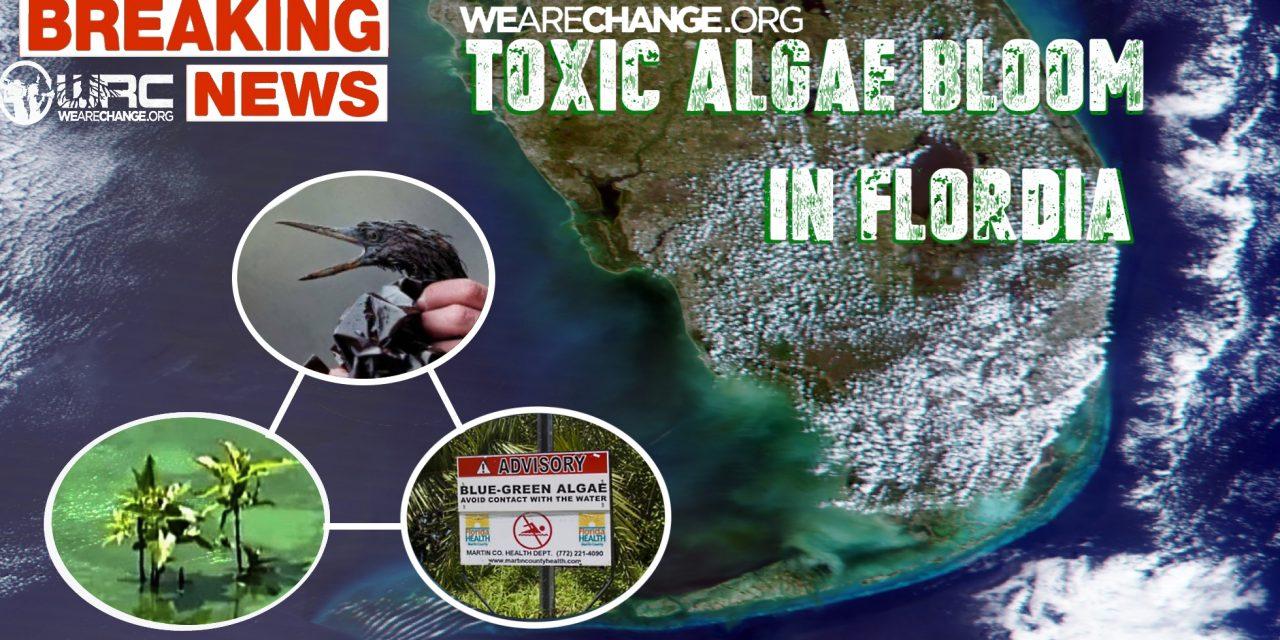 TOXIC ALGAE BOOM BLANKETS SOUTH FLORIDA BEACHES