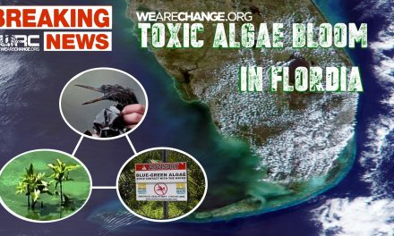 TOXIC ALGAE BOOM BLANKETS SOUTH FLORIDA BEACHES