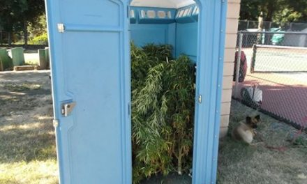 Oregon Man Finds Porta-Potty Filled to the Brim With Marijuana