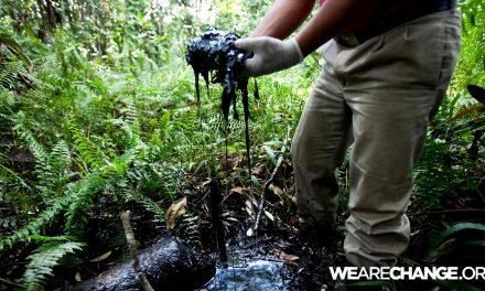 Ecuador To Sell A Third Of It's Rainforest To Chinese Oil Companies