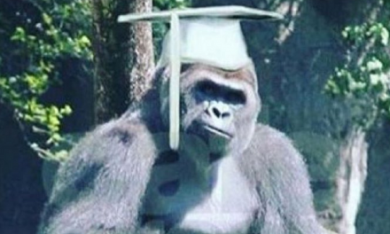 UMass Kills Harambe All Over Again: Declares Jokes Are 'Racist Micro-Aggressions'