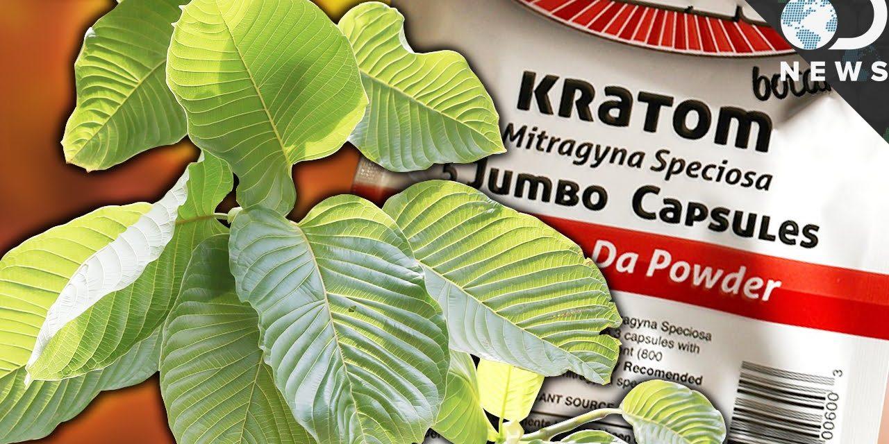 Kratom: Deadly Drug or Life-Saving Medicine?