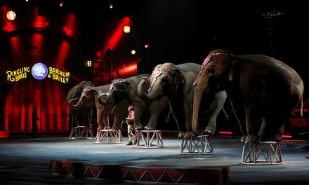 Ringling Bros. Circus To Shut Down After 146 Years And Numerous Abuse Allegations
