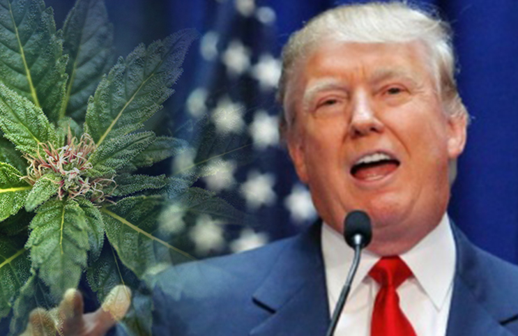 Why The 'War On Drugs' Will Flourish Under President Trump