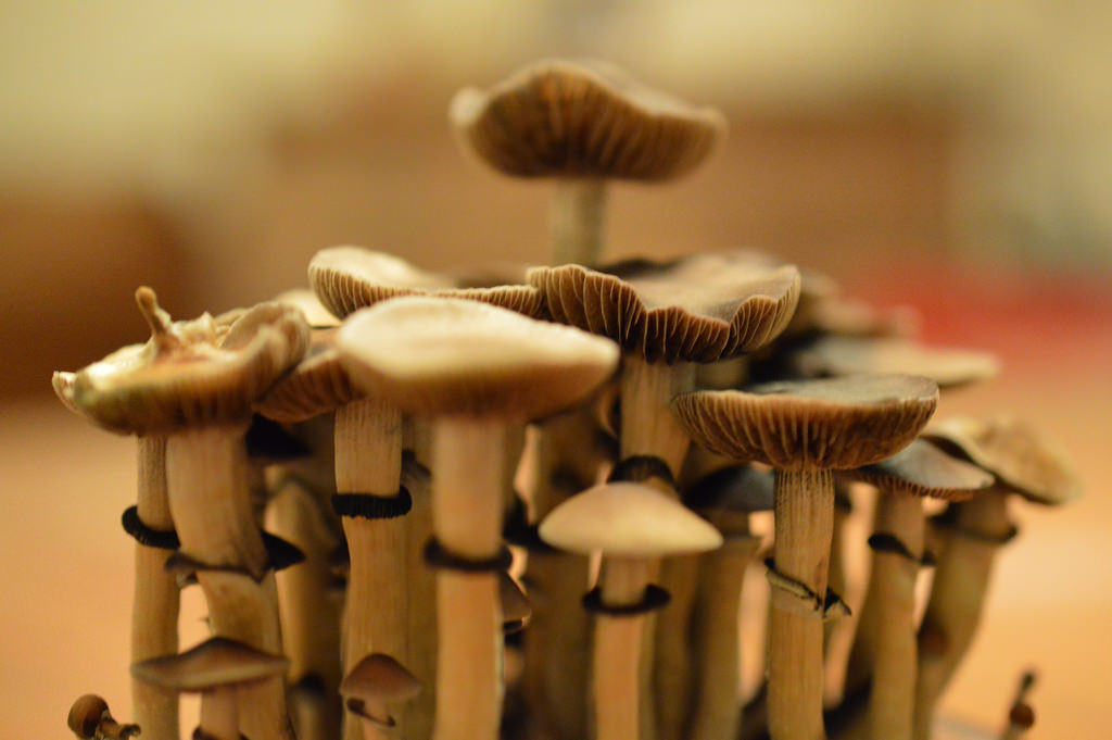 Legal Magic Mushrooms Could End The Antidepressant Industry By Curing Depression
