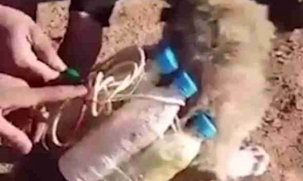 WATCH: ISIS STRAPS BOMB TO A DEFENSELESS PUPPY PMU RESCUES