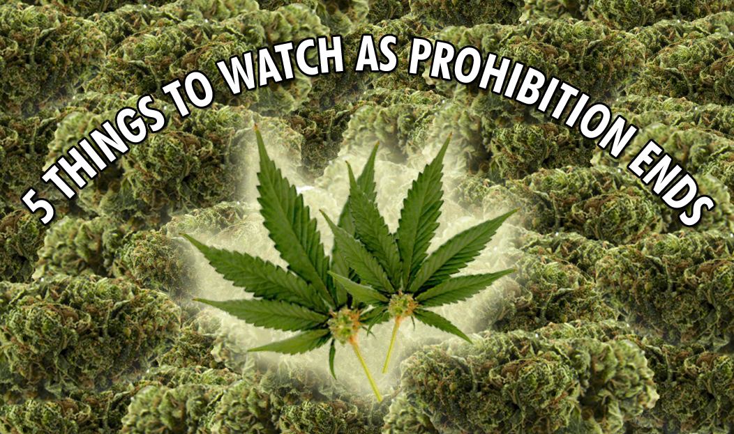 Legal Marijuana: 5 Trends To Watch As Prohibition Ends