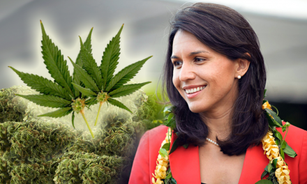 Decriminalize Marijuana: Congresswoman Tulsi Gabbard Proposes New Bill