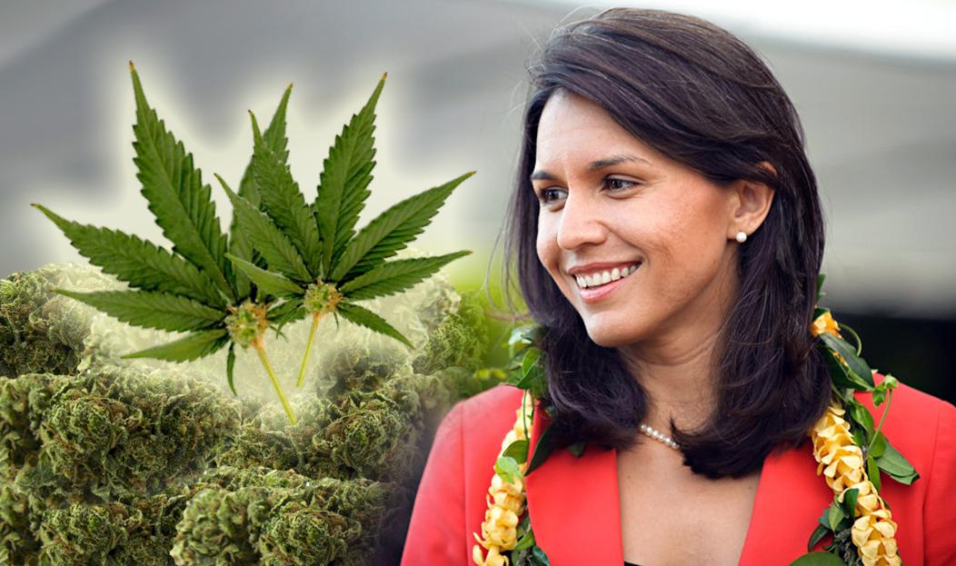 Decriminalize Marijuana: Congresswoman Tulsi Gabbard ...