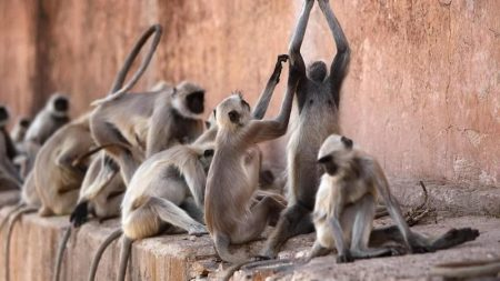 Gang Of Monkeys Attacks Lab Assistant, Escapes With Coronavirus Test Samples