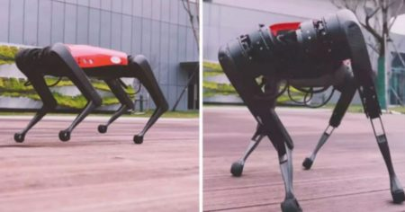 China is Building an Army of Terrifying Robot Dogs