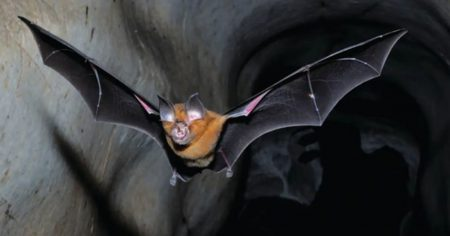 """Wuhan Scientists Planned to Release """"Chimeric COVID Spike Proteins"""" Into Wild Bats Using """"Skin-Penetrating Nanoparticles"""""""